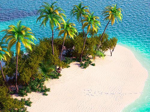 доминикана из спб фестиваль кокоса