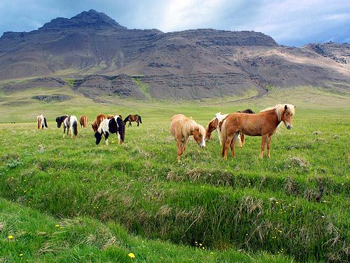 туры в исландию из спб